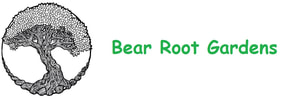 Bear Root Gardens - Sustainable Vegetable Seeds